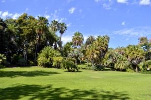 Palm Lawn