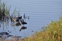 Bolsa Chica Wetlands (1)