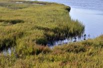 Bolsa Chica Wetlands (2)