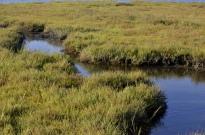 Bolsa Chica Wetlands (3)