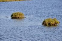 Bolsa Chica Wetlands (5)