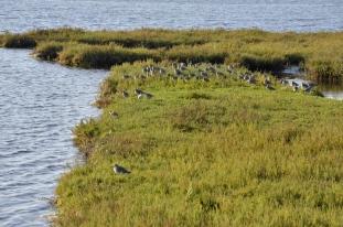 Bolsa Chica Wetlands (6)