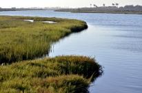 Bolsa Chica Wetlands (7)