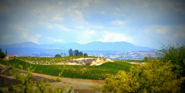 Not France, Not Italy, Temecula!