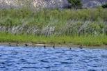 Duck paradise