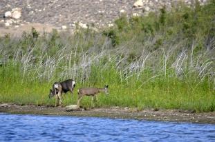 Deer paradise on the island
