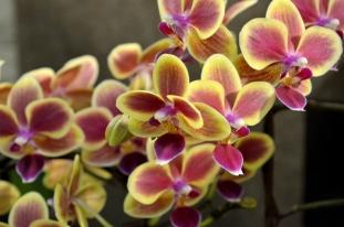 South Coast Botanic Gardens in Yellow (10)