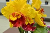 South Coast Botanic Gardens in Yellow (11)