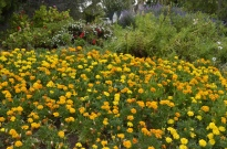 South Coast Botanic Gardens in Yellow (2)