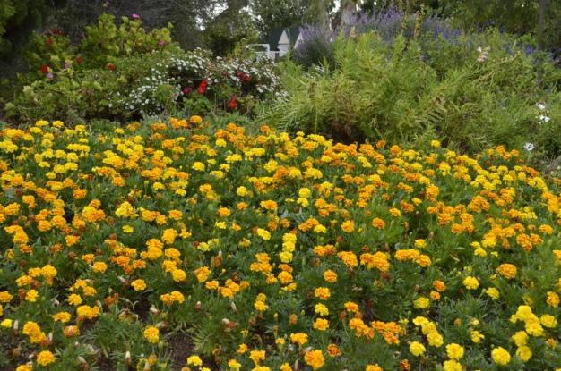 South Coast Botanic Gardens in Yellow (2)