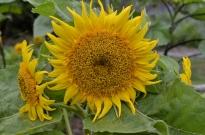 South Coast Botanic Gardens in Yellow (4)