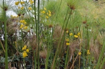 South Coast Botanic Gardens in Yellow (5)