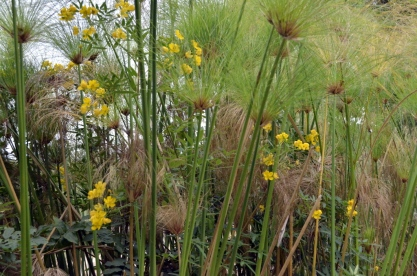 South Coast Botanic Gardens in Yellow (5)