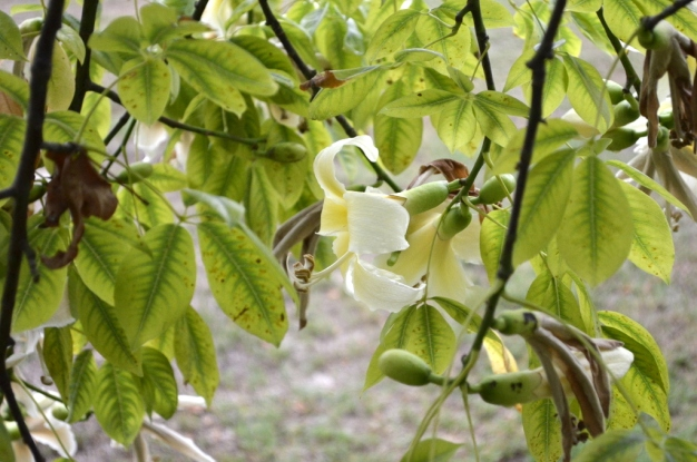 South Coast Botanic Gardens in Yellow (6)