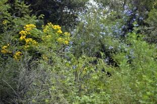 South Coast Botanic Gardens in Yellow (7)