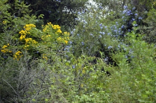 South Coast Botanic Gardens in Yellow (7)