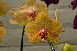 South Coast Botanic Gardens in Yellow (8)