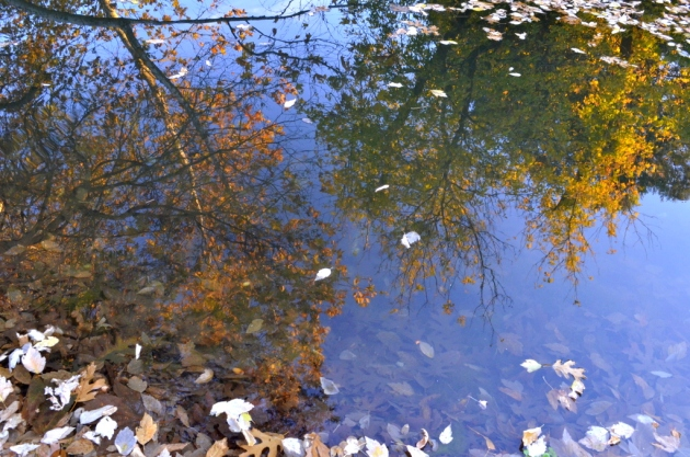 Reflection of Fall