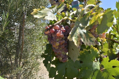 Southern California's Wine County (1)