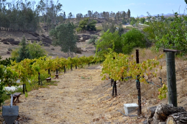 Southern California's Wine County (10)