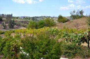 Southern California's Wine County (11)