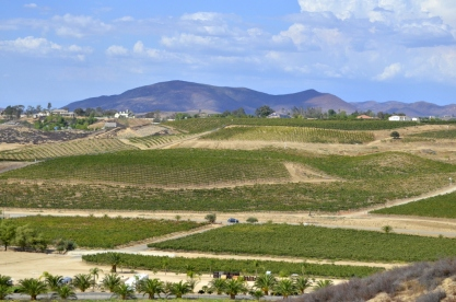 Southern California's Wine County (7)