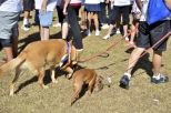We Walked Palm Springs to Fight AIDS (10)