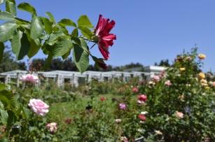 Huntington's Garden Colors (1)