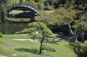 Japanese Garden at the Huntington (4)