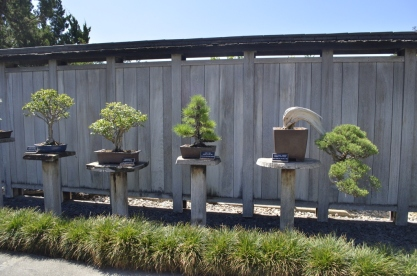 Japanese Garden at the Huntington (9)