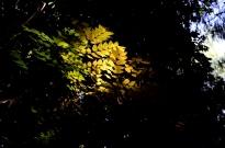 A bit of autumn color
