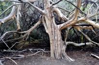 Sculptural tree