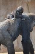 Safari Park (10)