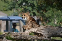 Safari Park (13)