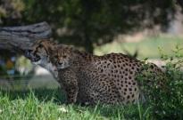 Safari Park (14)