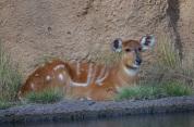 Safari Park (18)