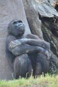 Safari Park (8)