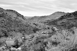 Desert Black and Whites (6)