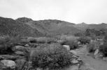 Desert Black and Whites (7)