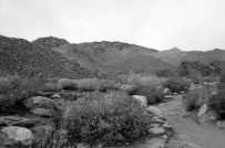 Desert Black and Whites (7)