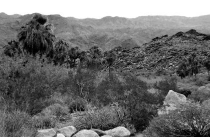 Desert Black and Whites (8)