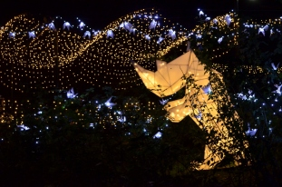 Los Angeles Zoo Holidays Lights (15)