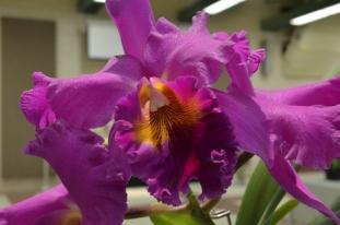 Orchids (5)
