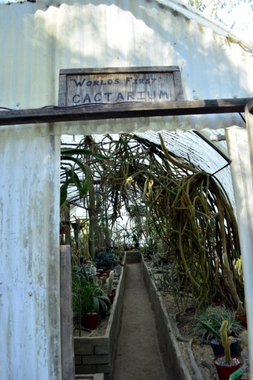 Visiting the World's First Cactarium (1)