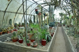 Visiting the World's First Cactarium (2)