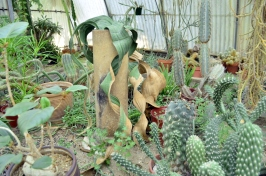Visiting the World's First Cactarium (4)
