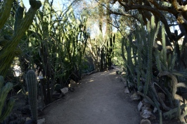 Moorten's Botanical Garden, part 1 (5)