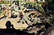 Moorten's Botanical Garden, part 2 (9)