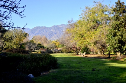 Three Views at the Arboretum (1)