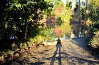 Three Views at the Arboretum (2)